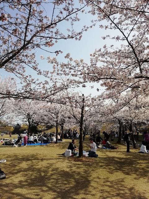 f:id:miwanotabi:20190407103433j:image
