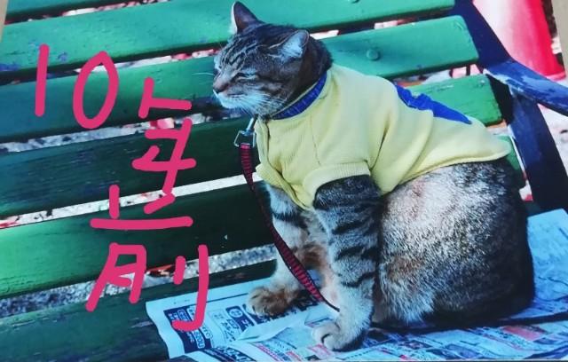f:id:miwanotabi:20190511110553j:plain