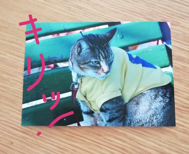 f:id:miwanotabi:20190512115240j:plain