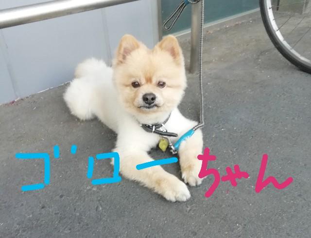f:id:miwanotabi:20190512135012j:plain