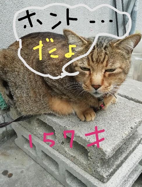 f:id:miwanotabi:20190602111042j:plain