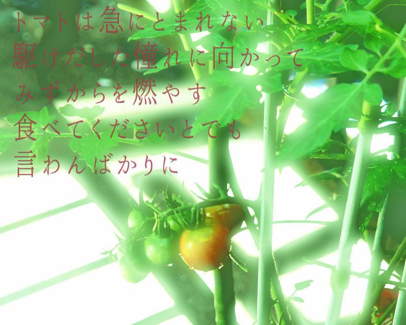 f:id:miya_ma:20200612220737j:plain