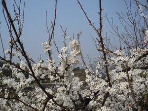 f:id:miyabiyaka:20070322143042j:image