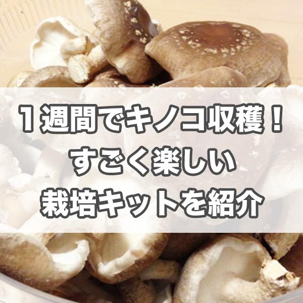 f:id:miyajin1015:20181112151036j:plain