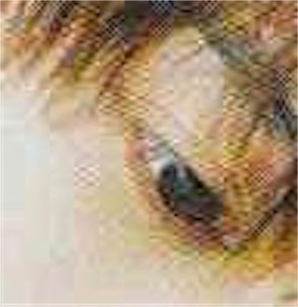 f:id:miyako-0622:20180717140559j:image