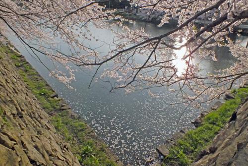 f:id:miyako2226:20120419145653j:image