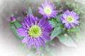 f:id:miyako2226:20120521173059j:image:medium:right