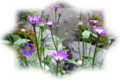 f:id:miyako2226:20120526111330j:image:medium:right