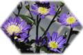f:id:miyako2226:20120601164503j:image:medium:right