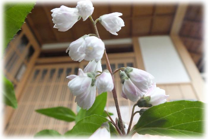 f:id:miyako2226:20120602112518j:image:w500