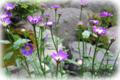 f:id:miyako2226:20120605163243j:image:medium:right