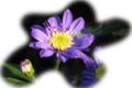 f:id:miyako2226:20120610173534j:image:medium:right