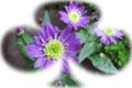 f:id:miyako2226:20120612220117j:image:medium:right