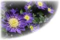 f:id:miyako2226:20120626003446j:image:medium:right