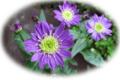 f:id:miyako2226:20120628144405j:image:medium:right