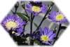 f:id:miyako2226:20120722224558j:image:right
