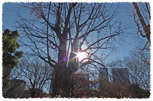 f:id:miyako2226:20121218160456j:image:w450