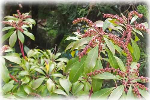 f:id:miyako2226:20121220143139j:image:w450