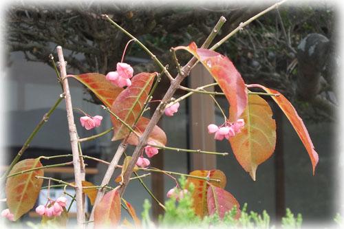 f:id:miyako2226:20121220145200j:image:w450