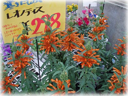 f:id:miyako2226:20121223213417j:image:w450