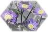 f:id:miyako2226:20130303114813j:image:right