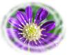 f:id:miyako2226:20130523103224j:image:right