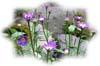 f:id:miyako2226:20130527180242j:image:right