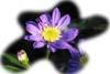 f:id:miyako2226:20130608214839j:image:right