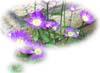 f:id:miyako2226:20130715151906j:image:right