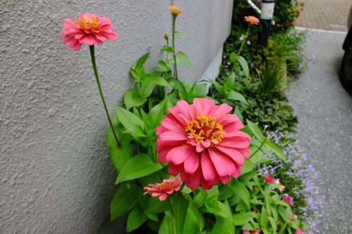 f:id:miyako2226:20130728134531j:image:w500