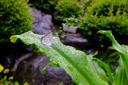 f:id:miyako2226:20130801124402j:image:w500
