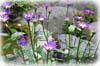 f:id:miyako2226:20130907001119j:image:right