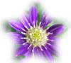 f:id:miyako2226:20131103171719j:image:right
