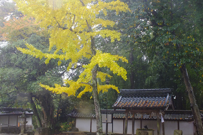 f:id:miyako2226:20131115225039j:image:w640