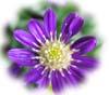 f:id:miyako2226:20131213173417j:image:right