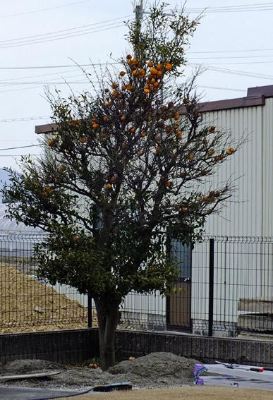 f:id:miyako2226:20140402160621j:image:w360