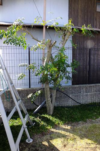 f:id:miyako2226:20140402172025j:image:w360