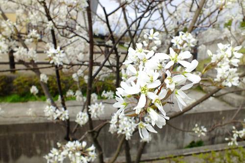 f:id:miyako2226:20150412225136j:image