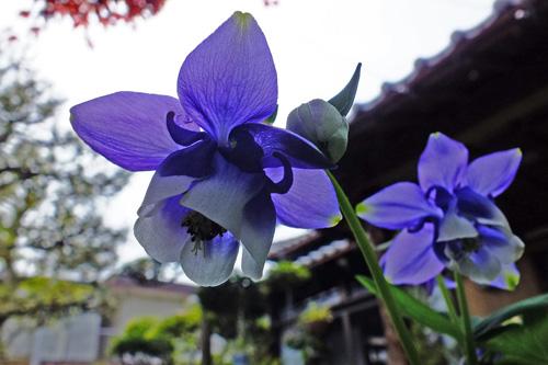 f:id:miyako2226:20150429172213j:image