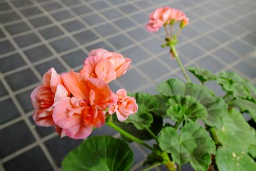 f:id:miyako2226:20150517161007j:image