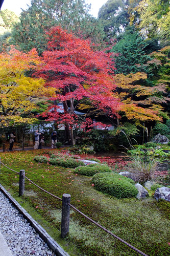 f:id:miyako2226:20161127003314j:image