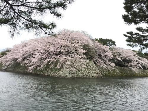 f:id:miyako2226:20170416163528j:image