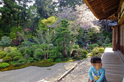 f:id:miyako2226:20170416180119j:image