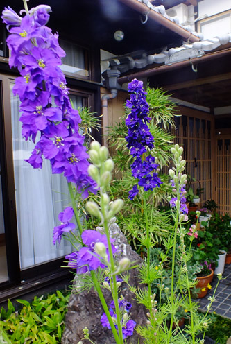 f:id:miyako2226:20170530231055j:image