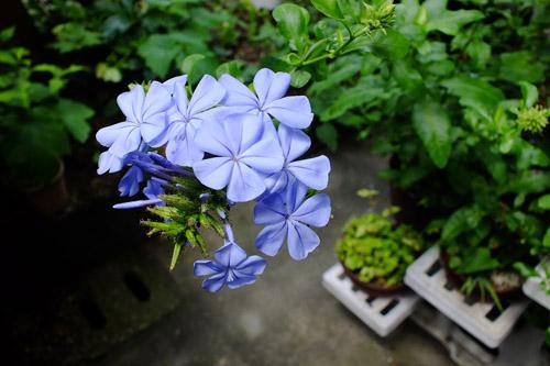 f:id:miyako2226:20170630191022j:image