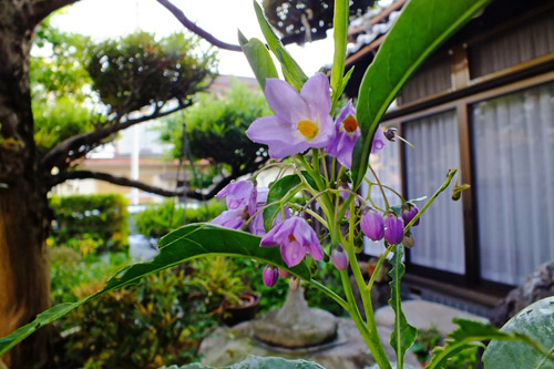 f:id:miyako2226:20170630191108j:image