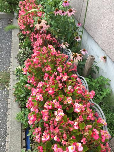 f:id:miyako2226:20170804213737j:image