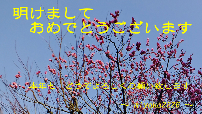 f:id:miyako2226:20180101223414j:image