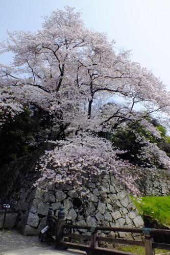 f:id:miyako2226:20180403185409j:image