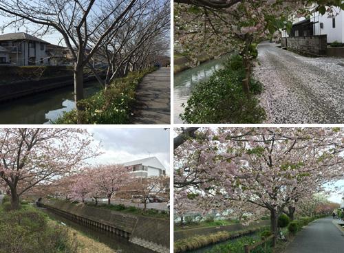 f:id:miyako2226:20180816173714j:image